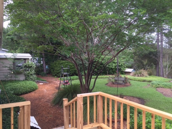 Looooots of plants, all planted my yours truly. Lots of work but it's also fulfilling to my soul to work in the yard.