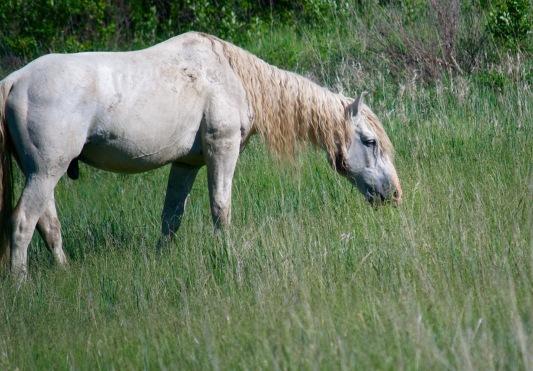 His mare